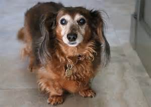 aging canine concerns picture 15