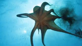 octopus h picture 7