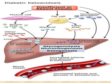which amino acids increases blood flow picture 2