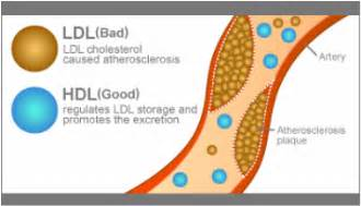 High hdl cholesterol picture 3