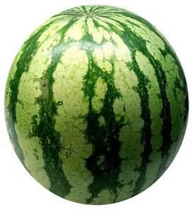watermelon libido picture 13