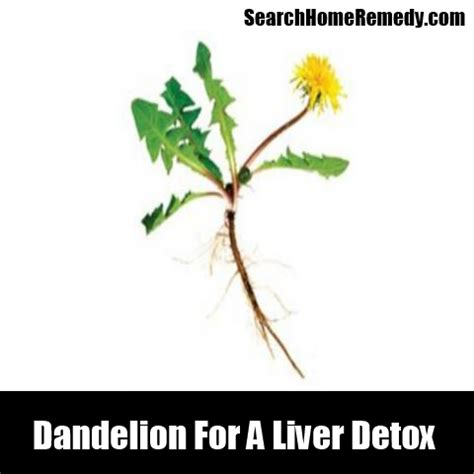 dandelion to cleanse the liver picture 9