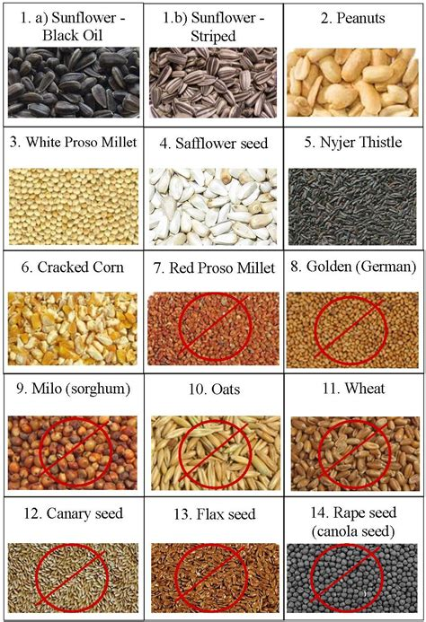 Can eating sunflower seeds raise cholesterol picture 3