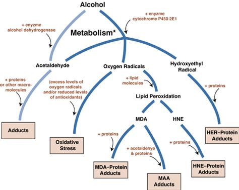 the process of digestion and metabolism of a picture 5