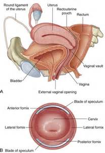 images of vaginal yeast infection picture 2