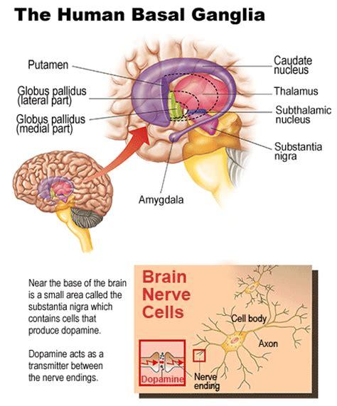 herbal dopamine receptor agonist picture 15