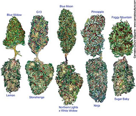 how many joints pot picture 13