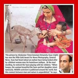 women breastfeeding pig picture 9