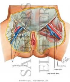 groin nodes and thyroid picture 1