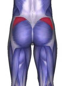 how long does it take for the piriformis picture 7