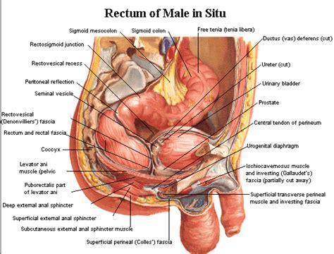 colon tumor names picture 5