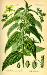 new herbal drugs picture 7