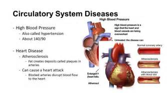 Human anatomy of blood pressure picture 2