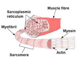 do plants have organized muscle fibers for movement picture 6