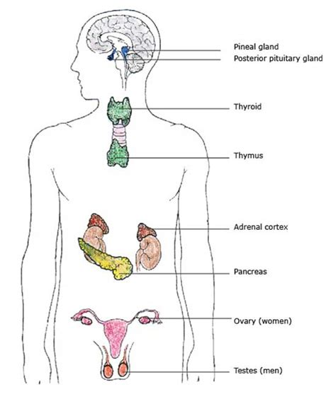 what does it mean if your thyroid has picture 6
