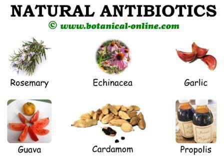 what is the natural plant antiobotic ldm picture 7