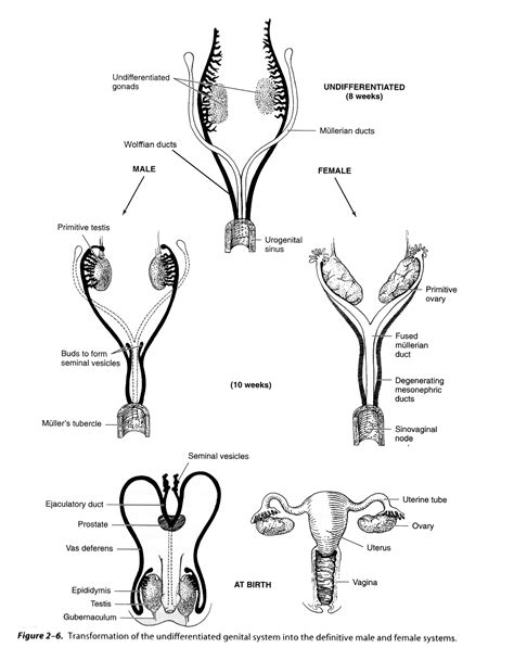 anti reproductive system picture 3
