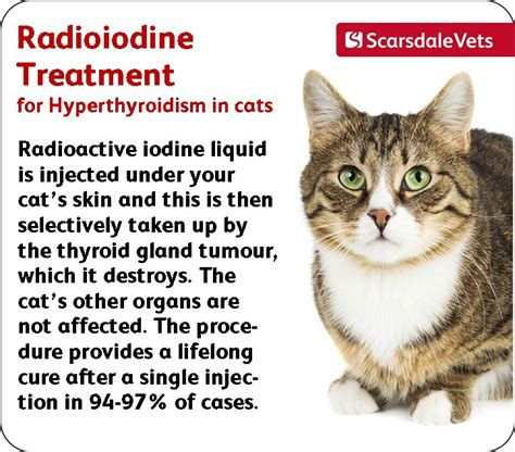 cat hyperthyroid joint pain relief picture 3
