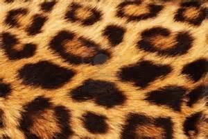 lleopard skin picture 6