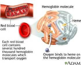 how does hypothyroidism cause anemia picture 6