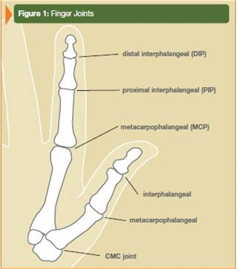 first finger joint pain picture 5