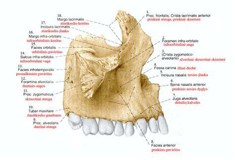 false teeth picture 9