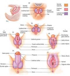 testosterone cycle 21 picture 9