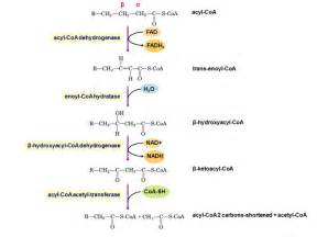 what is effect of redox fat picture 19