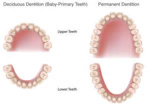 children teeth baby permanent when to pull picture 15
