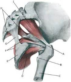 how to say the superficial muscles of the picture 10