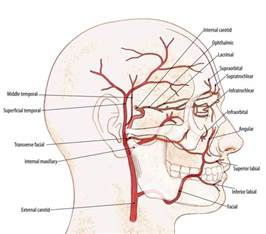 diagrams of nerve supply to thyroid gland picture 7