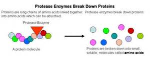 what foods with amino acids and enzemes make picture 9