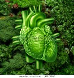 is green leafy lettuce good for people with picture 17