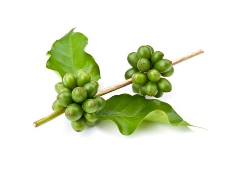 green coffee bean extract 50 picture 5