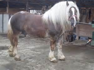 poze cu cai care fata picture 7