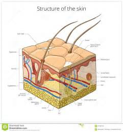 free illustrations of human skin images picture 10