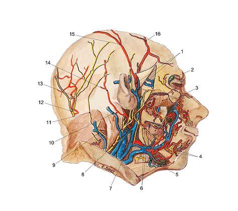 skin anatomy picture 10