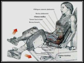 injury to the hip abductor muscle picture 5
