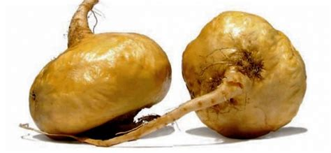 maca root for breast cysts picture 3