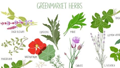 are there herbs out there to get flat picture 2