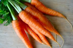 carrot picture 1