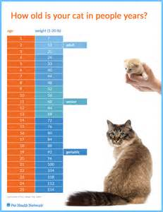 medical problems with aging cats picture 17