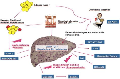 what nutrients does the liver need to metabolize picture 4