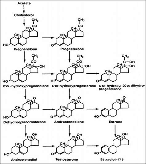 testosterone production cholesterol picture 2