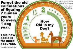 aging rottweiler care picture 6
