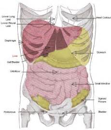 enter your info[ ] body organs picture 3