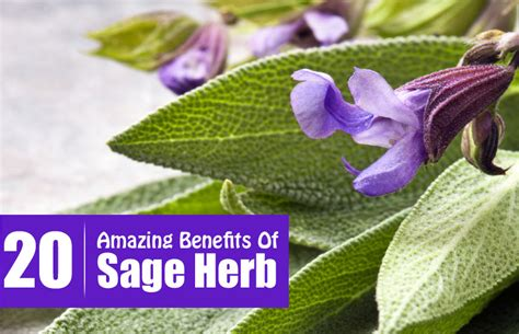 salvia for skin picture 11