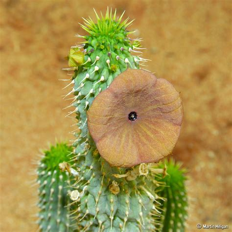 which hoodia is better picture 5