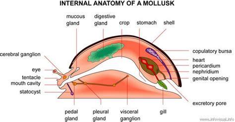 chelicerata locomotion digestion circulation respiration excretion picture 3