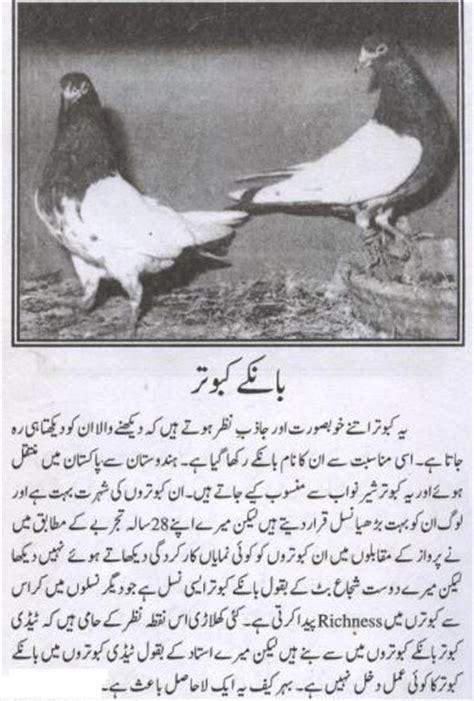 pigeon tips in urdu picture 1